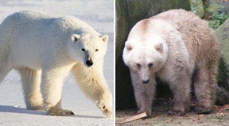 FOTO/ Ndryshimet klimatike po sjellin këto specie të reja hibride kafshësh