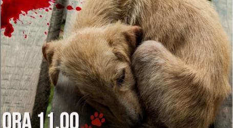 Protesta e kafshëdashësve, dhimbje legjitime, abuzim politik dhe mashtrime mediatike