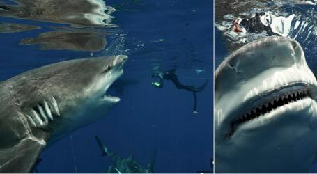 FOTO/ Super-peshkaqeni për pak sa nuk e 'bloi' me nofullat e tij. Cila ishte arsyeja pse zhytësi shpëtoi paq…