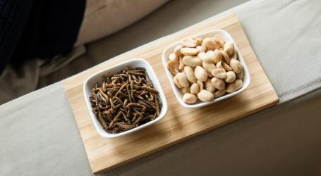 Agjencia Europiane e Sigurisë Ushqimore: Ushqehuni me krimbat e verdhë, janë të pasura me proteina, yndyrna dhe fibra